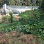 Obst- und Gemüse-Garten in der Kommune Sulzbrunn