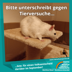 Volksentscheid Tierversuche - Ratte auf Kletterbaum